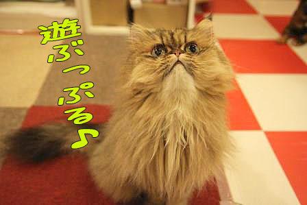 ぷるぷる20161226-01