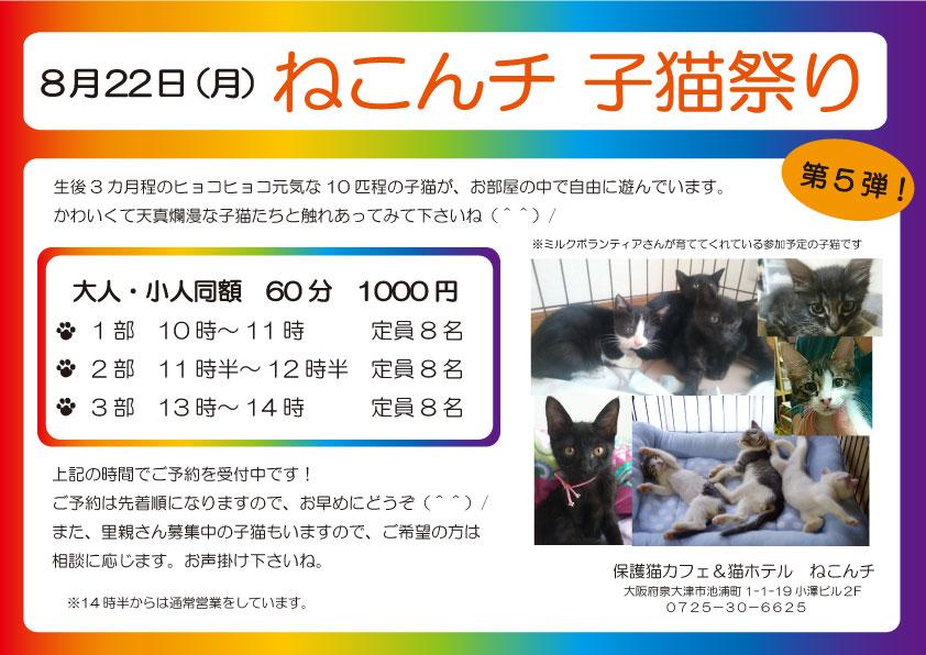 8月22日 子猫祭り チラシ