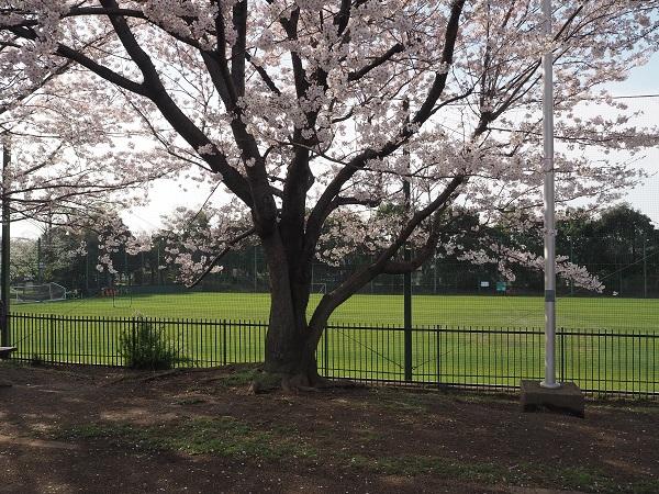 1h28,4お花見井草の森公園