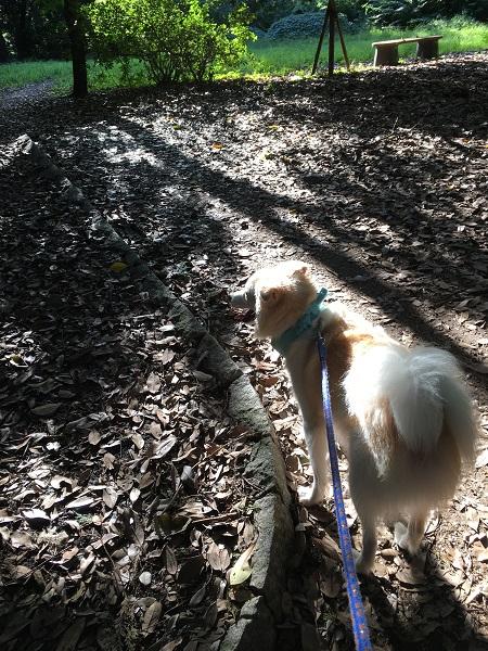 1h28,9木漏れ日の朝散歩