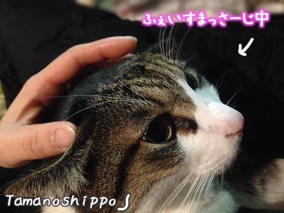 猫のフェイスマッサージ(ちび)