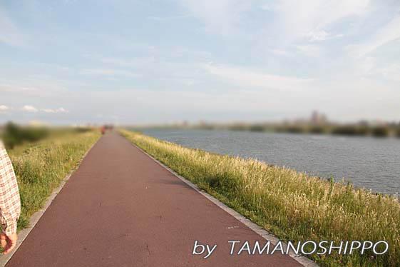 散歩した川辺