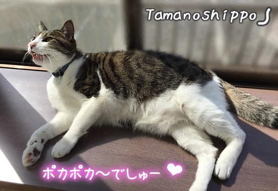 窓辺でのんびり日光浴をする猫(ちび)