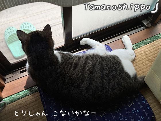 窓辺でお外を眺めている猫(のんびりなちび)