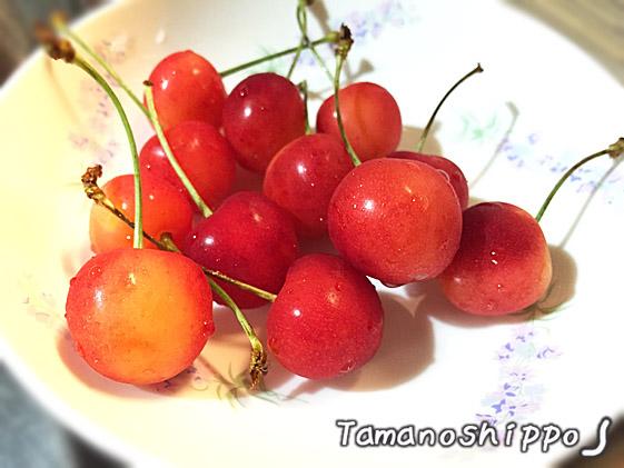 旬の味(さくらんぼ)