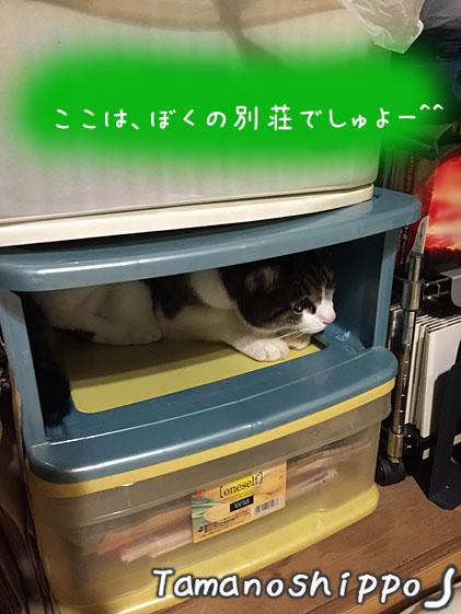 ケースの中で寛ぐ猫(ちび)別荘