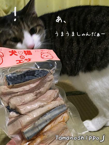 高知のかつおをクンクンする猫(ちび)