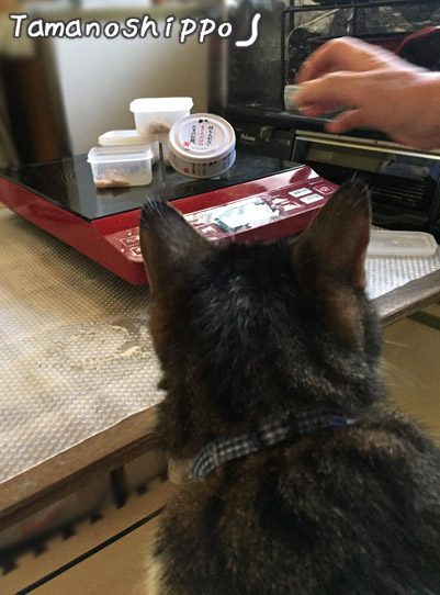 たまの伝説(缶詰め)を狙う猫(ちび)
