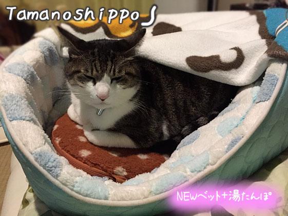 猫ベットに入れた湯たんぽで温まる猫