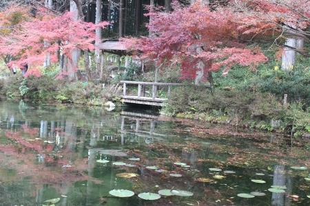 モネの池(岐阜) 007a