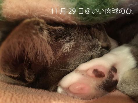 20161129_006.jpg