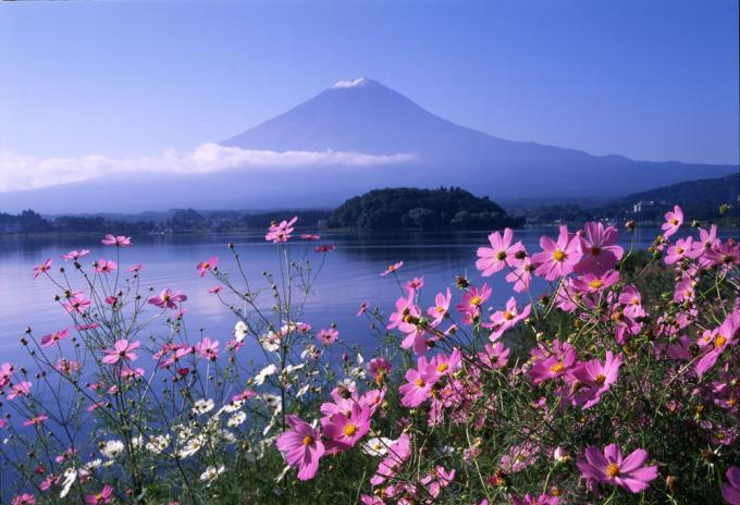 20160923 富士山とコスモス