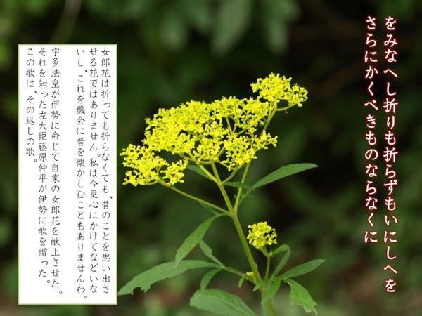 20161210 伊勢3