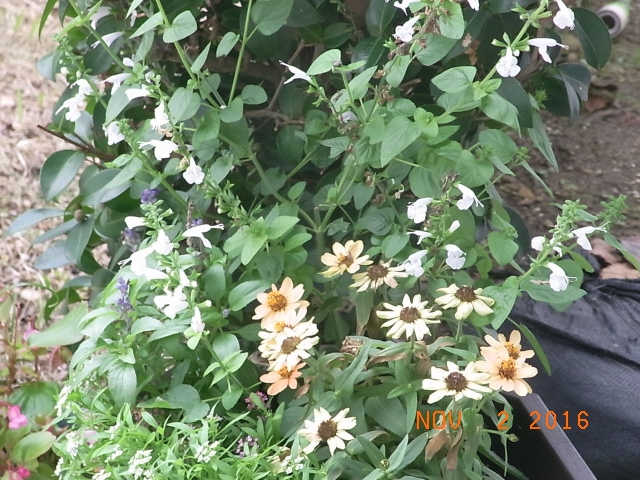 市役所前の花②