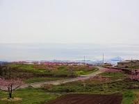 4月14日 新府の桃と富士山 2