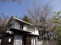 4月15日 蔵座敷の桜