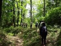 林の中を歩いて行きます
