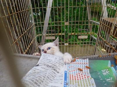 160609 野良子猫3