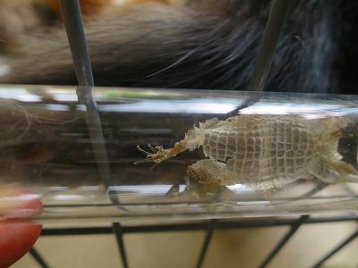 2016728 脱皮したトカゲの皮
