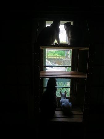 2016813 猫センサー