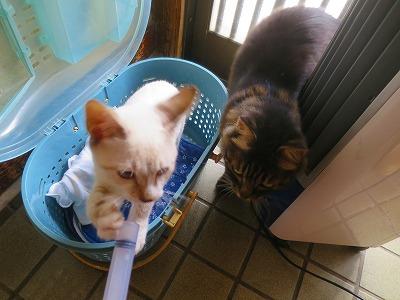 2016815 猫の熱中症2