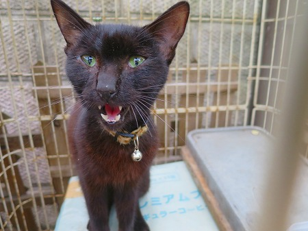 2016828 黒猫