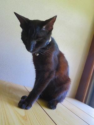 2016831 黒猫