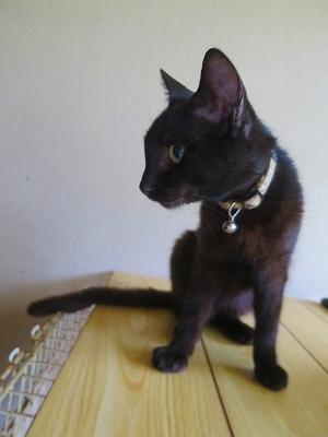 2016903 黒猫7日目3