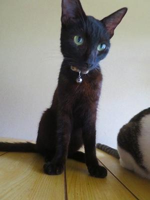 2016903 黒猫7日目1