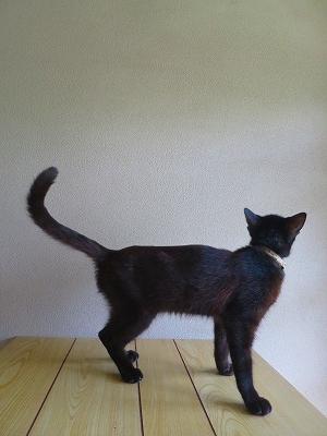 2016903 黒猫7日目2