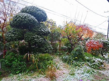 20161125 初雪