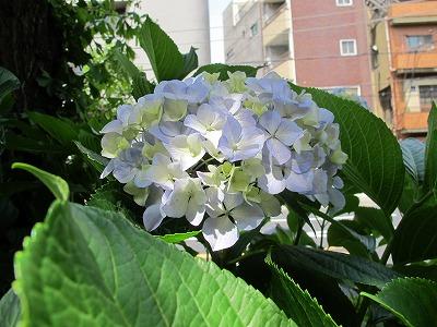 IMG_0226-s.jpg