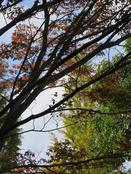 木 紅葉 3