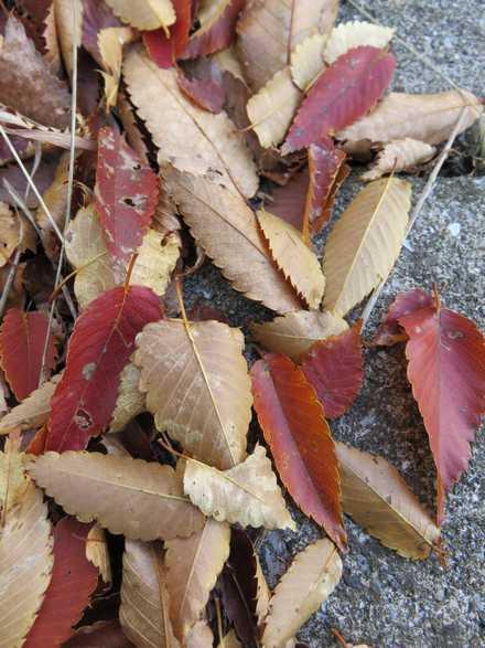 木 紅葉 4