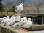 20161128_大橋鳥03