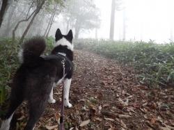 fogy.jpg
