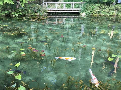 1038-モネの池