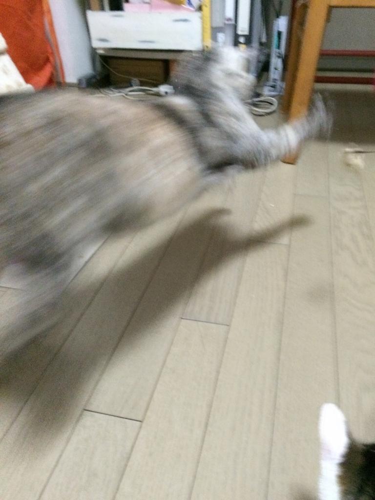 熊本にゃんこ12月 (7)