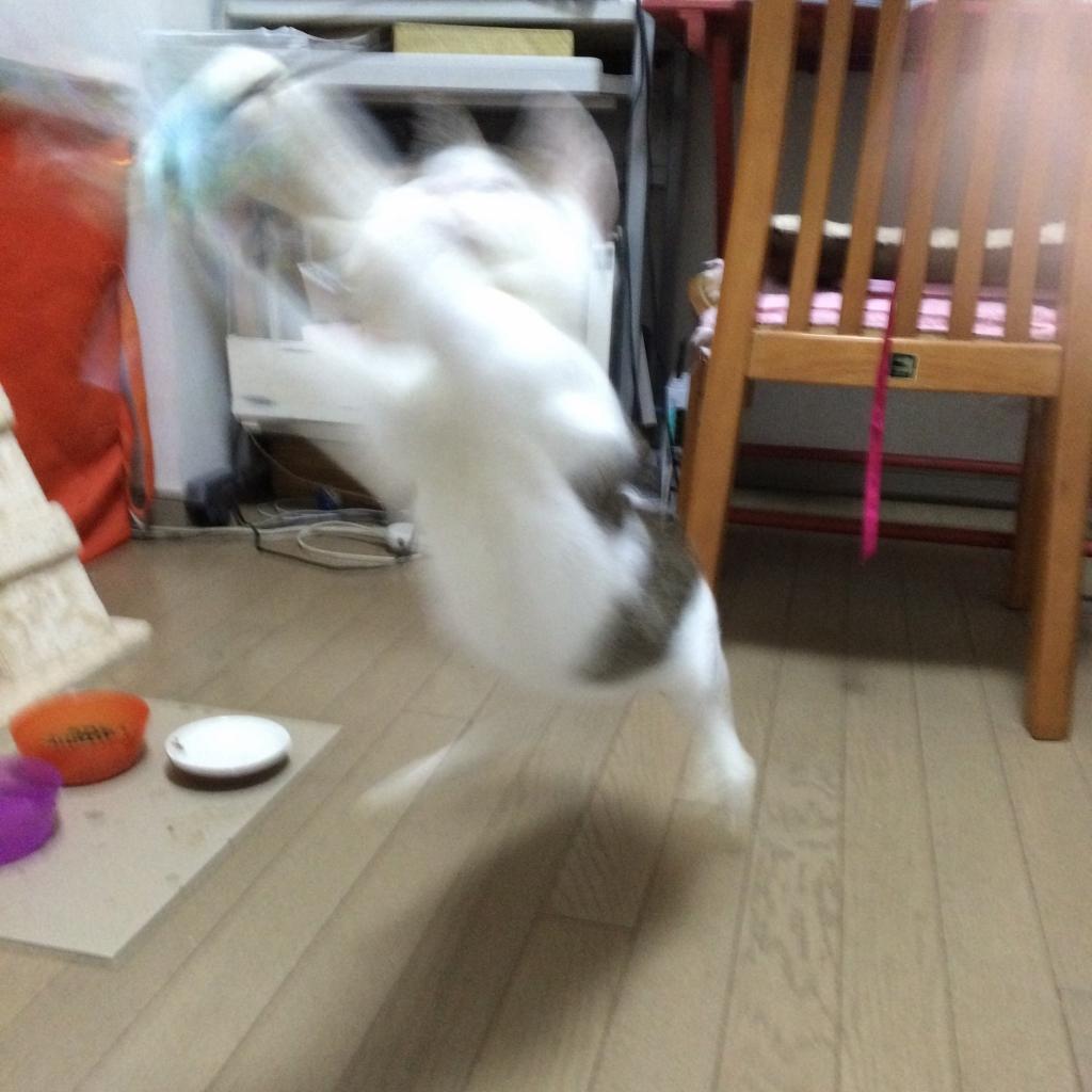 熊本にゃんこ12月 (13)