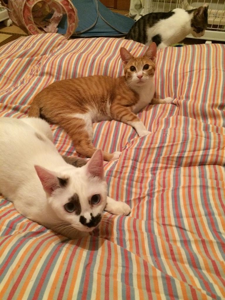 熊本3猫衆 (17)