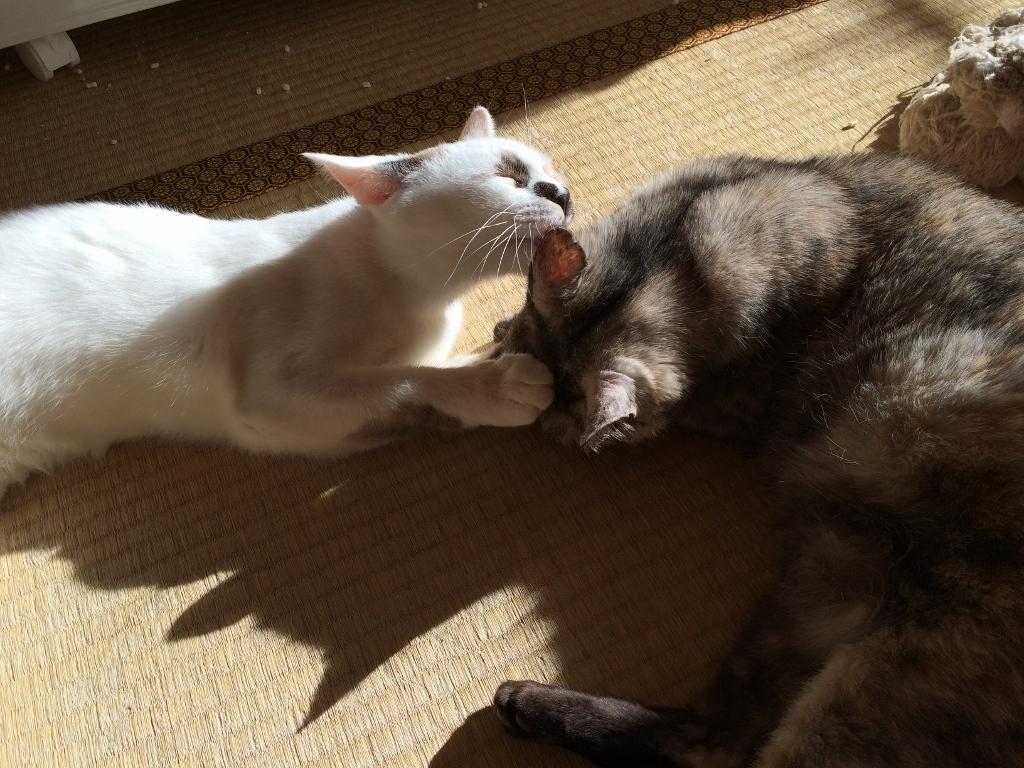 熊本3猫衆 (3)