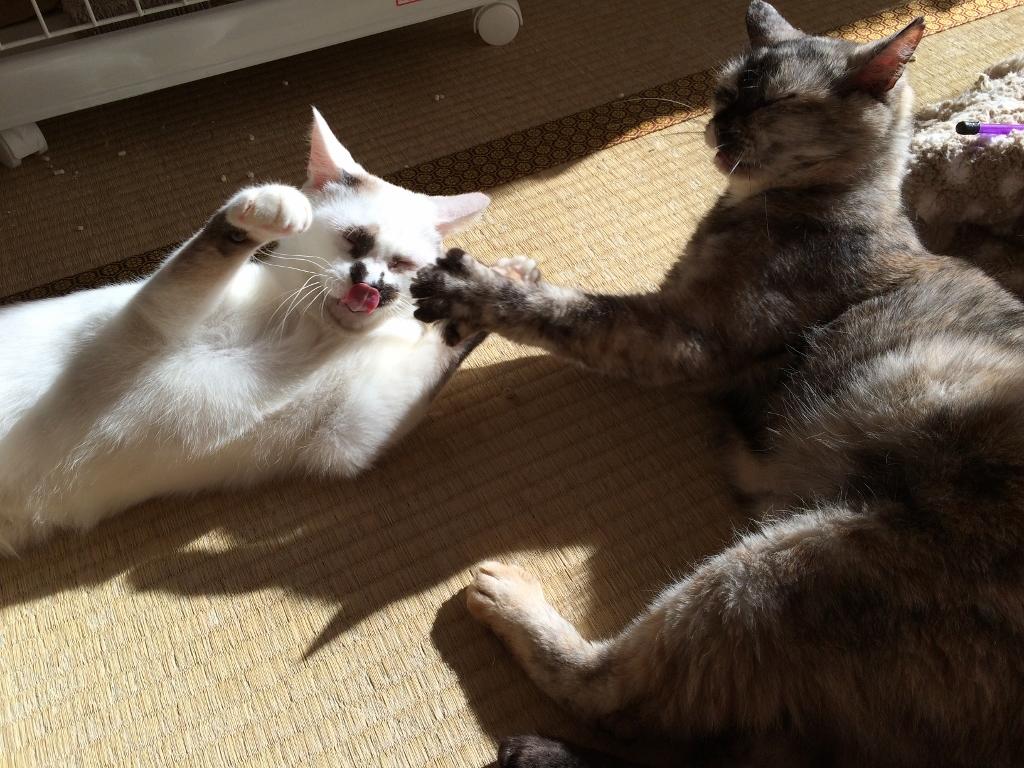 熊本3猫衆 (4)