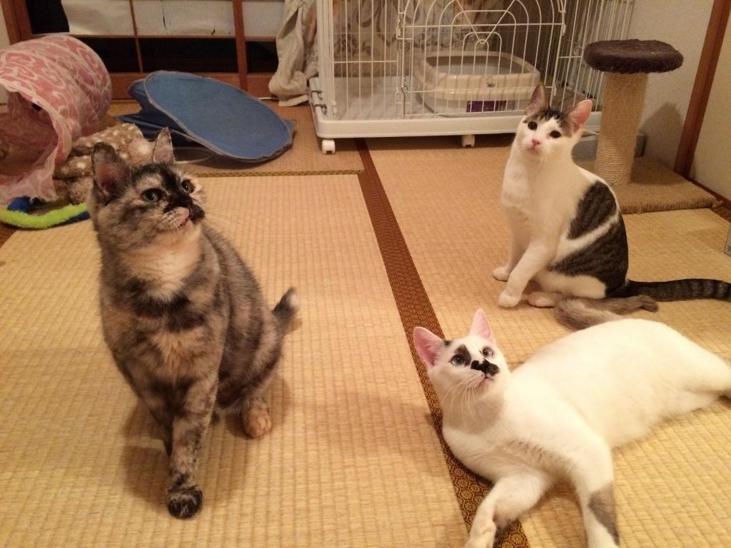 熊本3猫衆 (1)