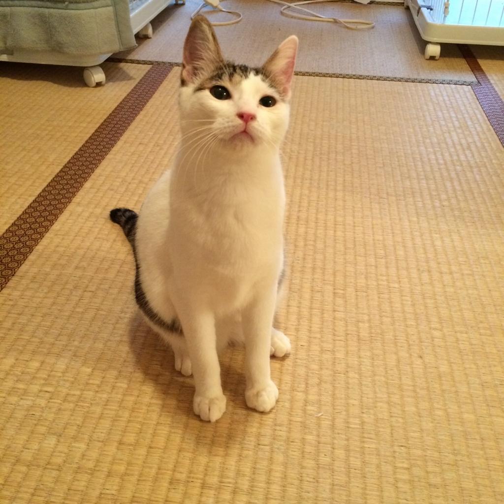 熊本3猫衆 (9)