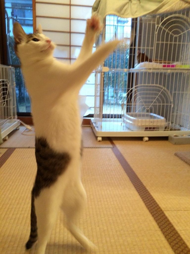 熊本3猫衆 (10)