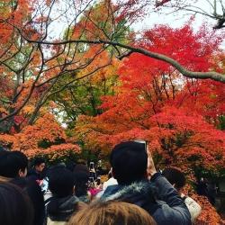 20161125_Tofukuji