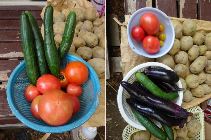 トマトの収穫_convert_20160626165254_convert_20160626165545