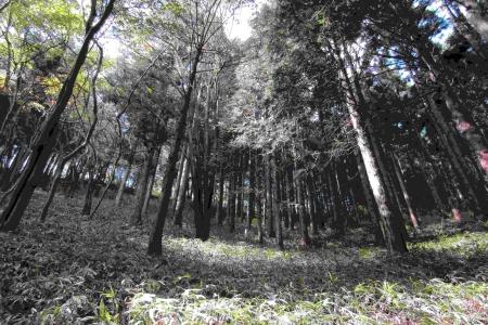 161029鐘撞山~音羽山 (19)s