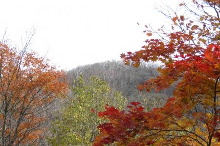 161030鍋割山~荒山 (21)s
