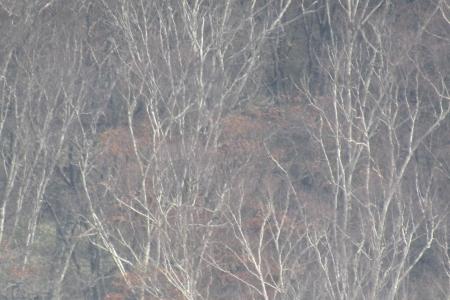 161030鍋割山~荒山 (30)s
